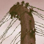 Palo con filo spinato - Giorno della Memoria 2020