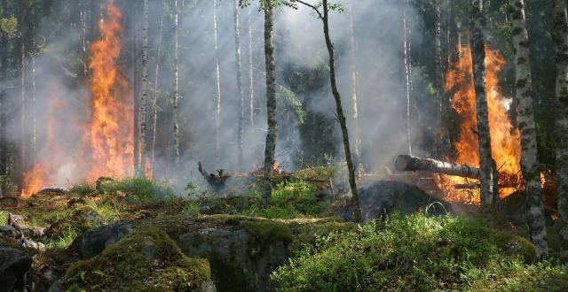 Bosco in fiamme - incendi