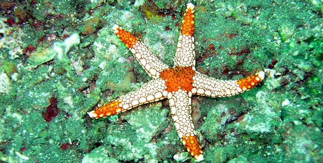 Stella maria bianca e arancione su fondale verde