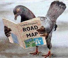 Le migrazioni degli uccelli avvengono grazie alla percezione dei campi magnetici