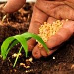 Sempre più giovani decidono di lavorare nell'agricoltura