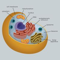 La struttura di una cellula