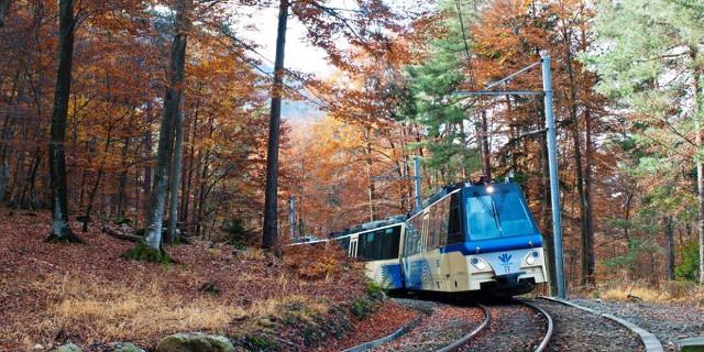 Treno in paesaggio autunnale - ferrovia Vigezzina-Centovalli